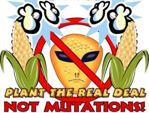 Which do you prefer? The real deal or GMOs?